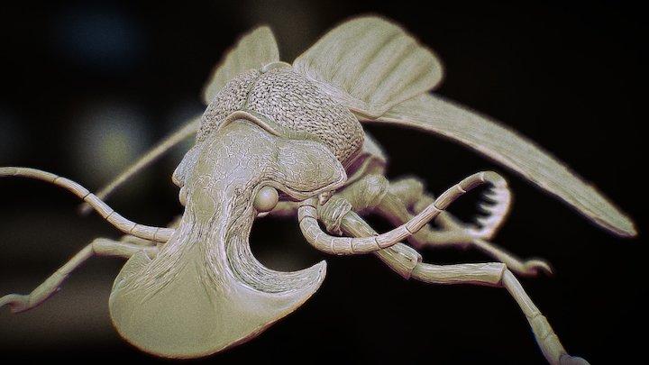 Boar Beetle 3D Model