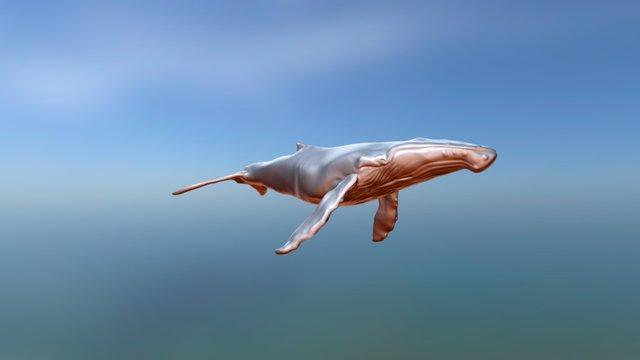 Humpback Whale - Megaptera novaeangliae [WIP] 3D Model