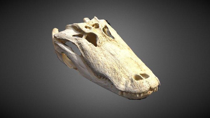 Gator Skull 3D Model