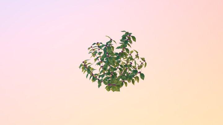 American beautyberry (Callicarpa americana) 3D Model