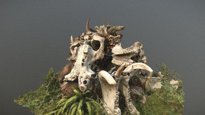 Pile of animal bones, Kenya 3D Model