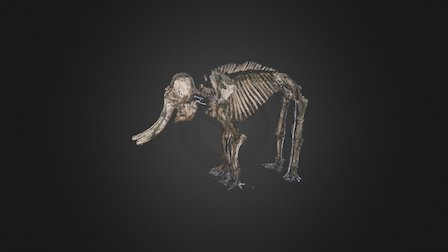 Asian Elephant skeleton (Point Cloud) 3D Model