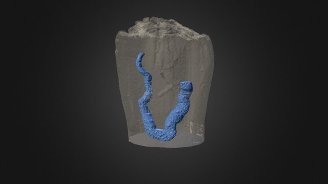 Early post-metamorphic blastoid 3D Model