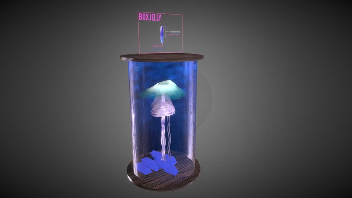 Box Jellyfish : Nematocysts Structure 3D Model