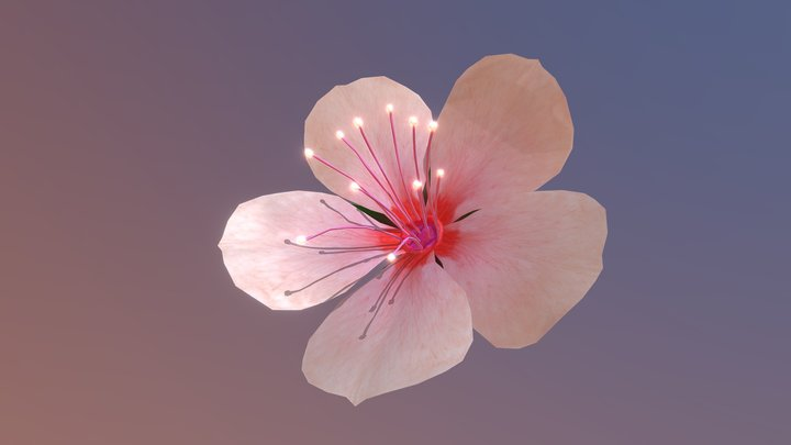 Cherry Blossom_rigged,animated 3D Model