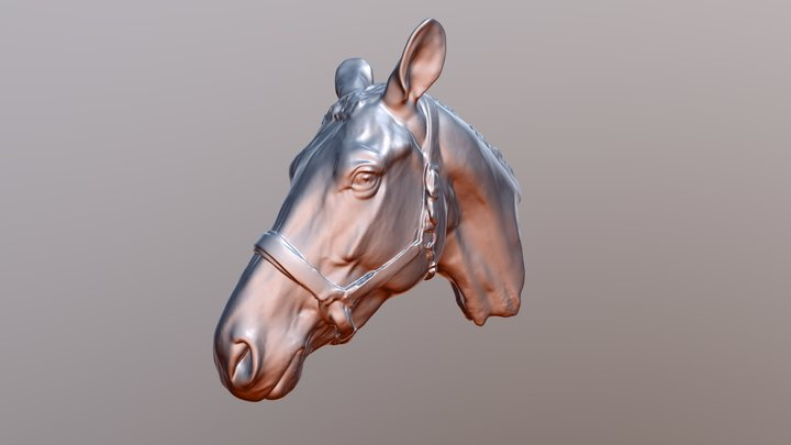 3D Scan - Pferdekopf 3D Model
