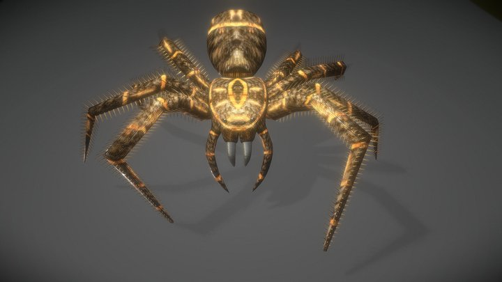 Spider Animations 3D Model