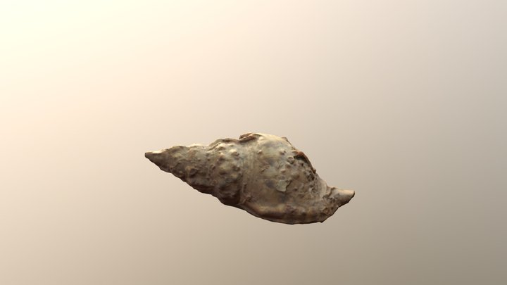 Conch shell (Scan) 3D Model