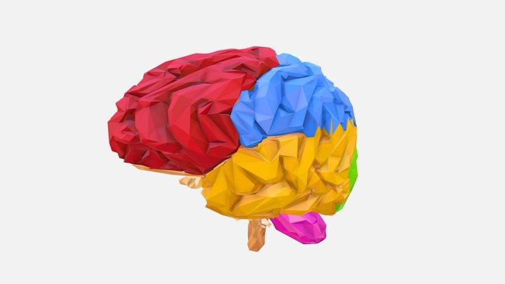 Low Polygon Art Medical Brain Color 02 3D Model