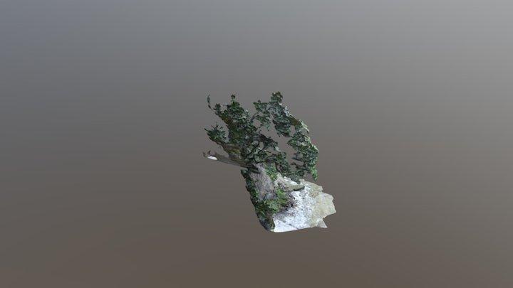 CLIFF MANGAMANGAROA 3D Model