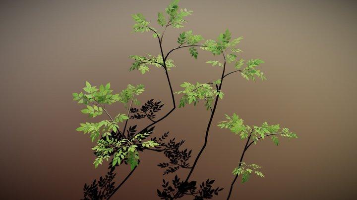 Growing Tree 3D Model
