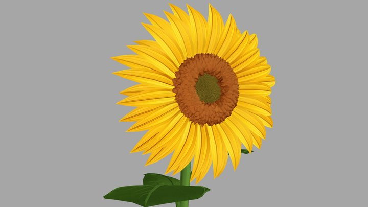 Cartoon-Styles Sunflower 3D Model