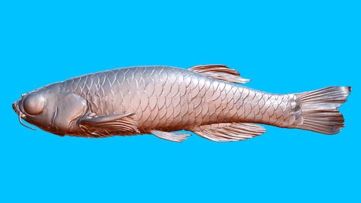 Zebrafish_male _1 3D Model