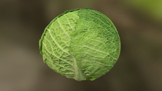 Savoy Cabbage photoscan 3D Model