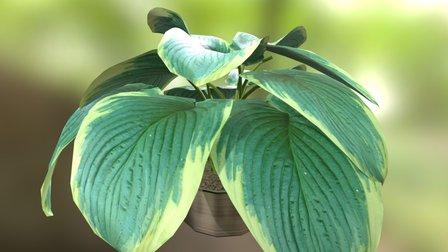 Plant 07 3D Model
