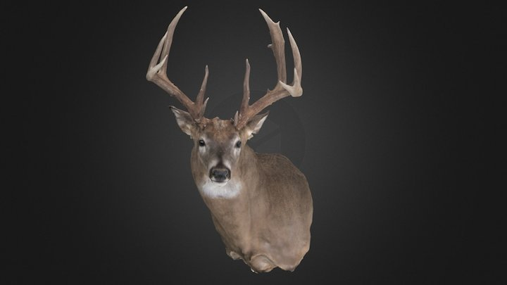 Chad Becker Whitetail 3D Model