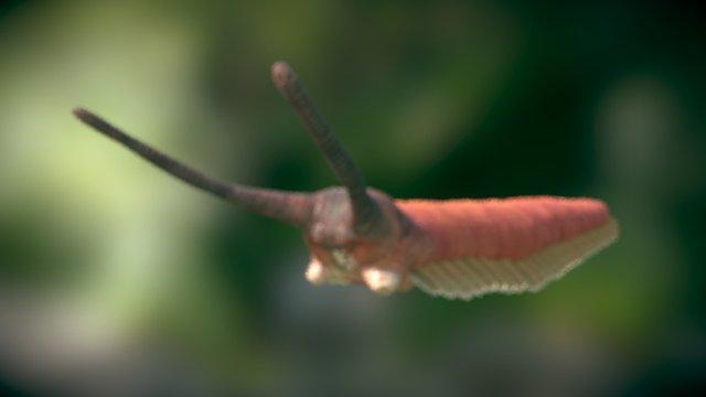 Onicóforo 3D Model