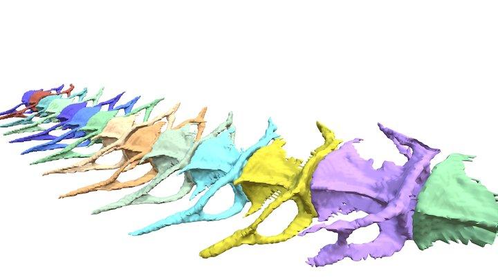 Zebrafish vertebrae 3D Model