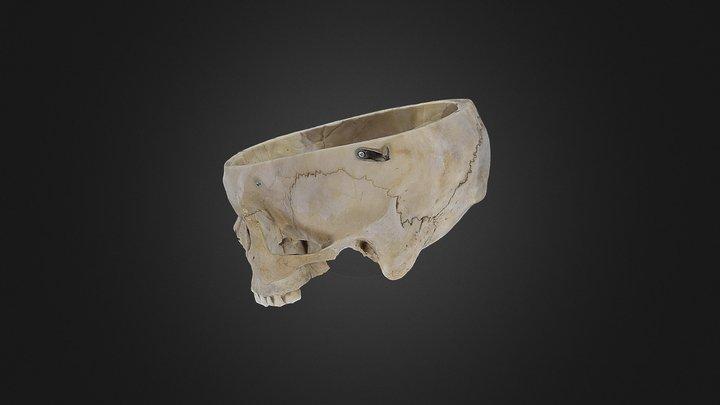 Human Cranium 3D Model