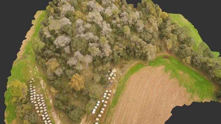 Bosc de pins afectat per Diploida Pinea 3D Model