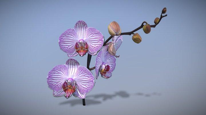 Orchid flower 3D Model