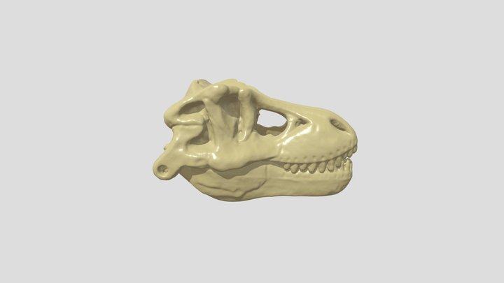 T-rex Skull 3D Model