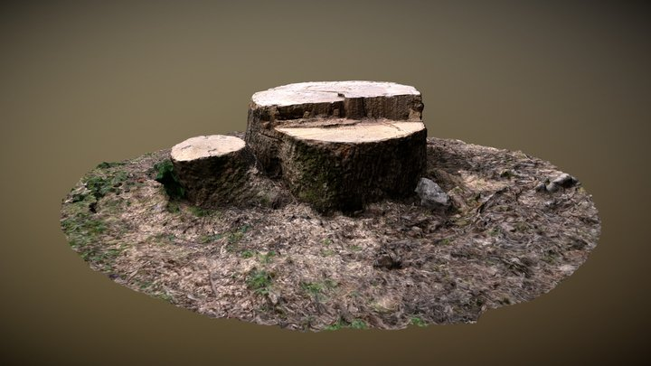 Tree Stump 02 3D Model