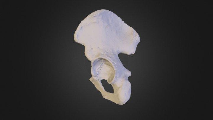 Os-Coxae 3D Model