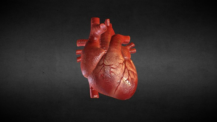 [Animation] Human Heart 3D Model