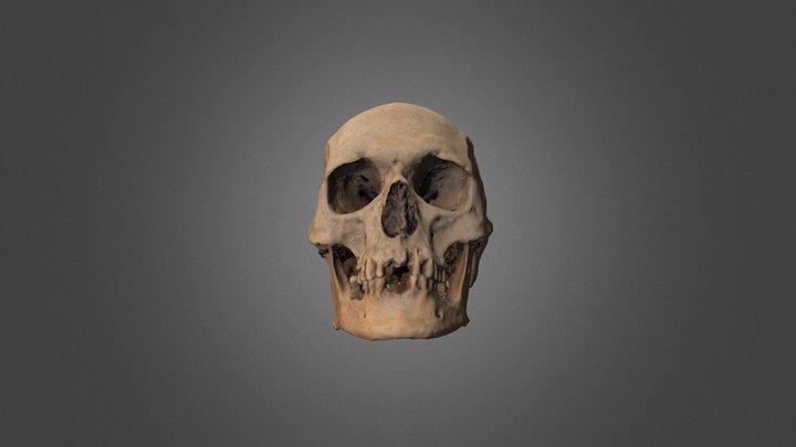 Cranio dell'Alto Medioevo 3D Model