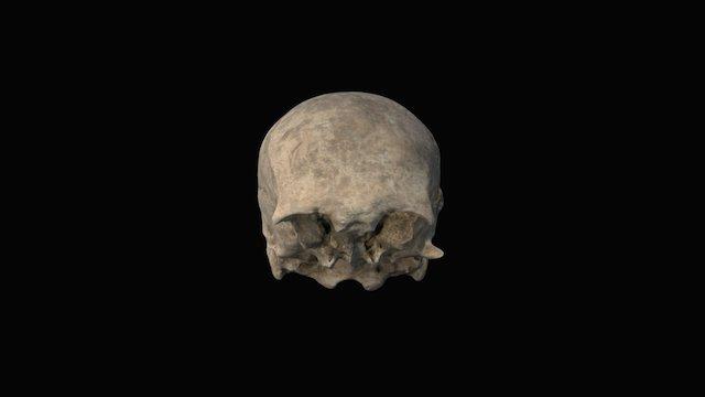 Teschio - Skull 3D Model