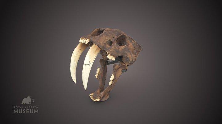 Sabre-tooth skull 3D Model