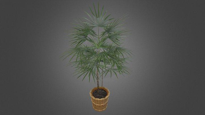 Office Plant 16 3D Model