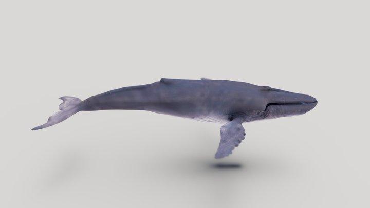 WIP humpback whale 3D Model