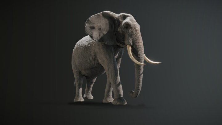 African elephant   PBR   Low poly 3D Model