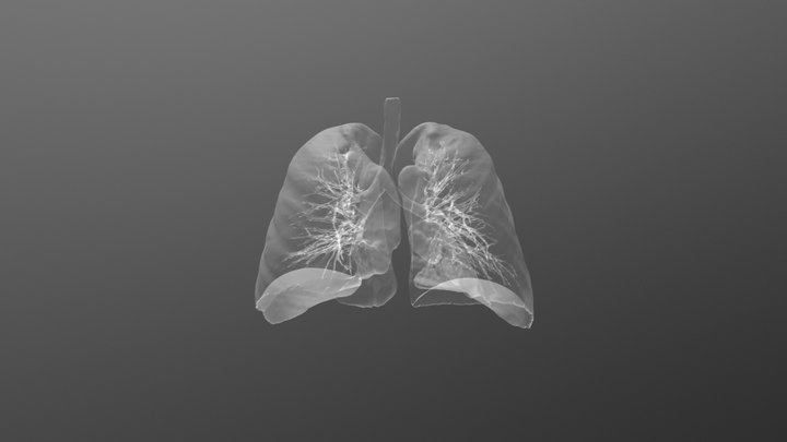 Lungs - normal study 3D Model