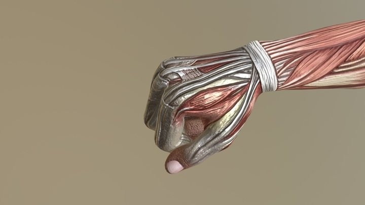 Animated Hand 3D Model