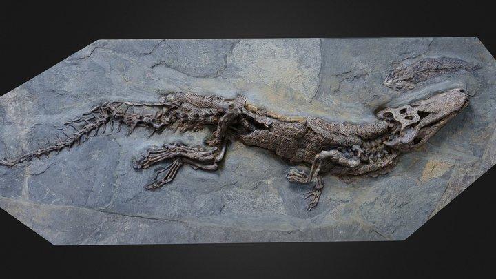 Crocodile fossil 1 3D Model