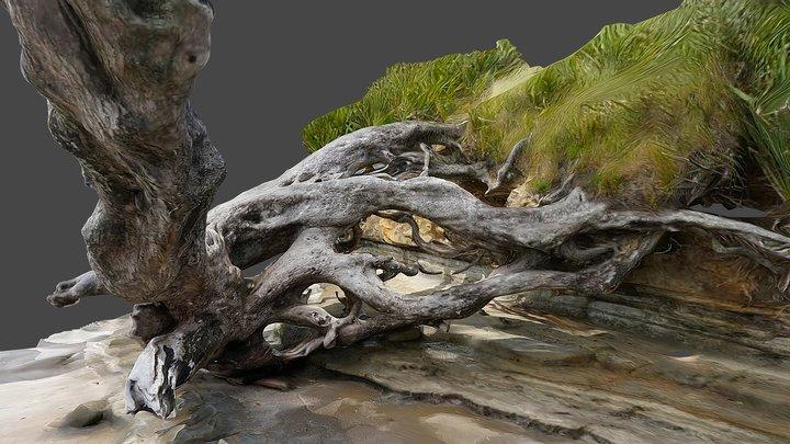 Pohutukawa tree 2 3D Model