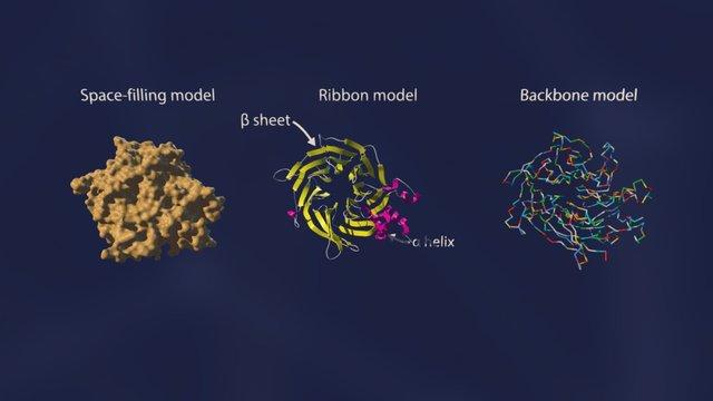 RBBP7 3D Model