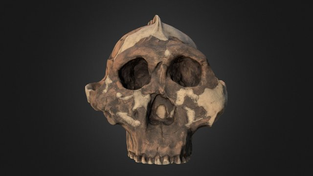 Zinj 3D Model