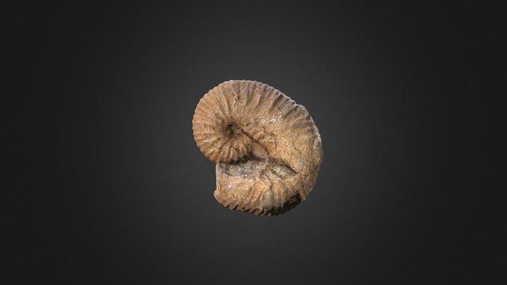 Scaphites corvensis D10458 3D Model