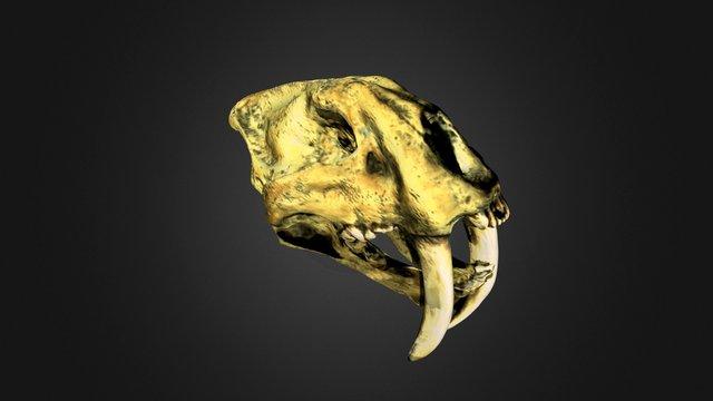 Sabertooth Tiger skull 3D Model