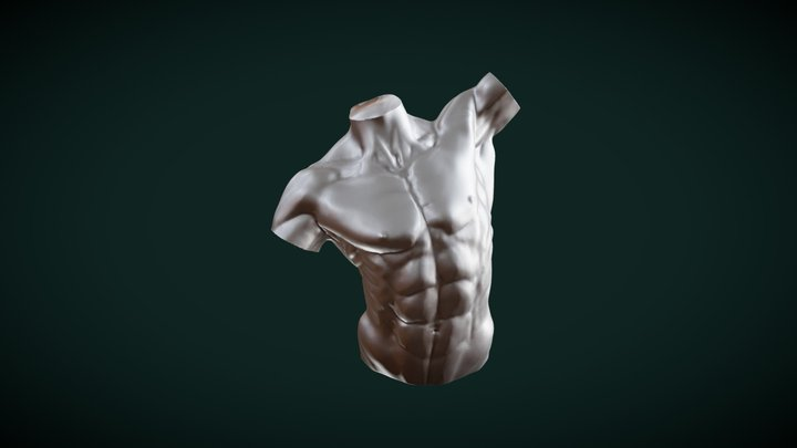 Male Torso / Chest - Sculpt January2019 - no 3 3D Model