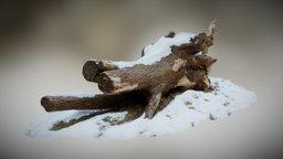 Drevo 3D Model