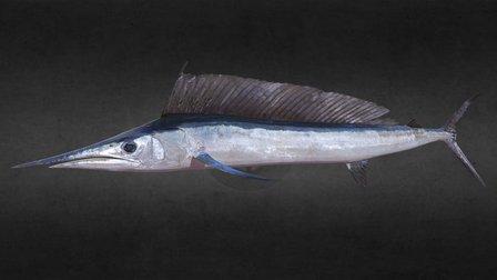 Longbill Spearfish 3D Model