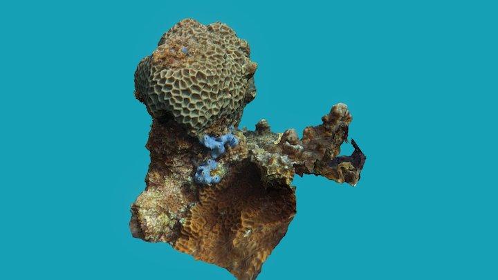 Coral head 3D Model