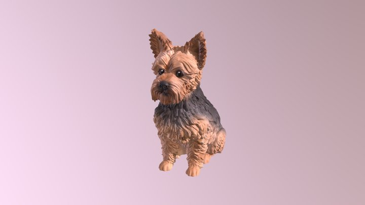 1809019- Harvey- Yorkshire Terrier 3D Model