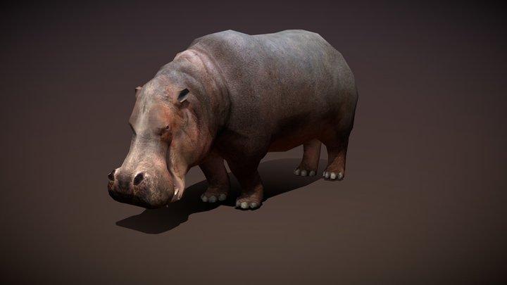Safari animals - Hippo 3D Model