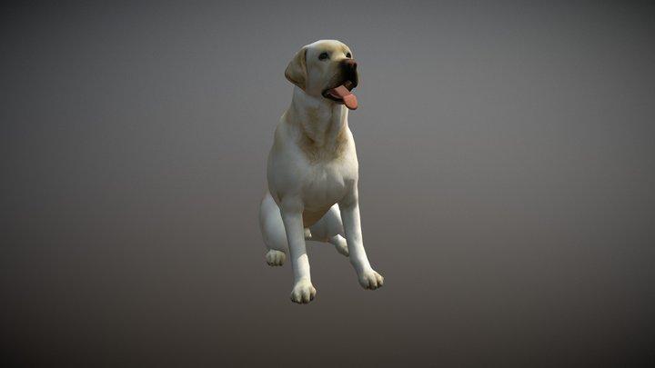 Labradoggo Animations 3D Model